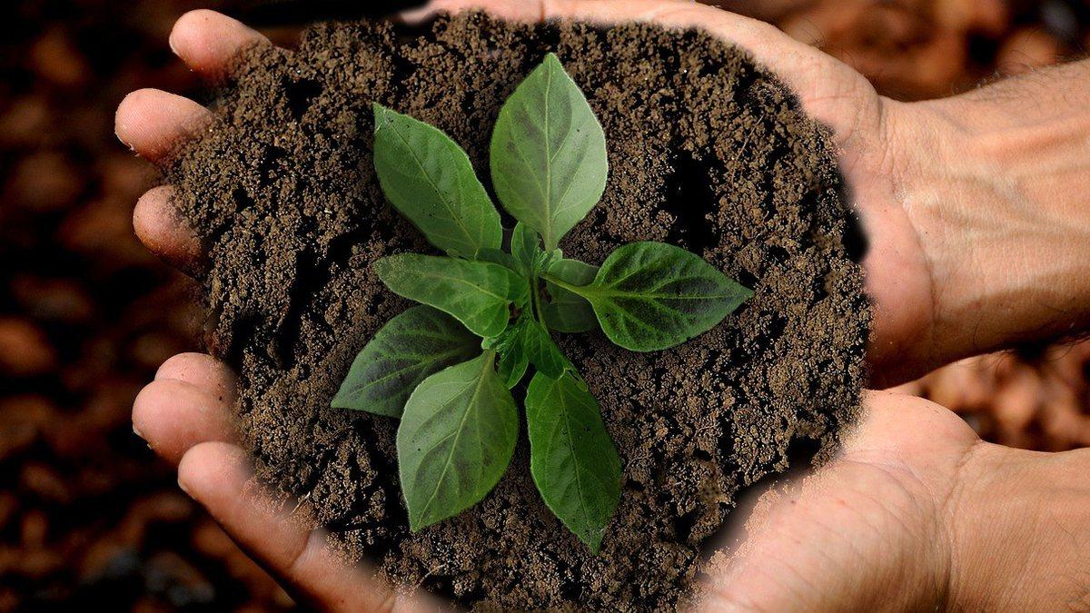 Concurso CRPH: pessoa segurando planta