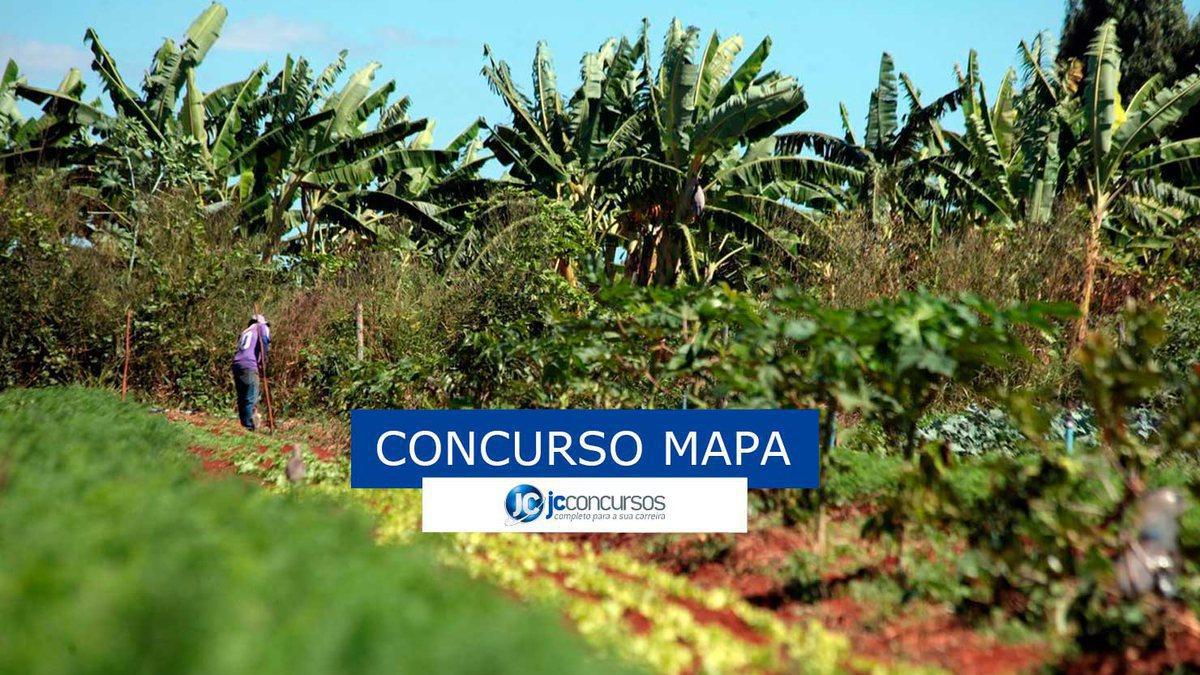 Concurso Mapa : matagal