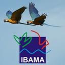 Ibama 2019 Temporários - IBAMA